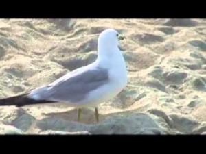 BIRDSRETURN2